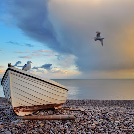 Stormy sunset by Valentina Scarpa  - Landscapes Waterscapes ( clouds, seagull, sunset )
