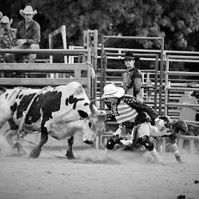 Cowboy Protection by Brian  Shoemaker  - Black & White Sports