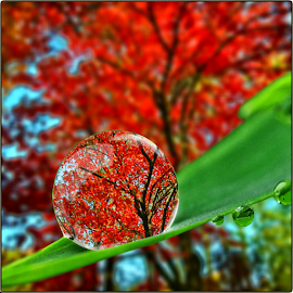Fall Drop by Amada Gonzalez - Uncategorized All Uncategorized ( fall, digital art, artistic, weather, photography )