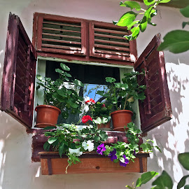 Window by Dobrin Anca - Instagram & Mobile iPhone ( love, home, window, romania, garden )