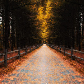 When I am afraid, I will trust in you. by Victor Hugo - Digital Art Places ( pines, fence, tree, victor, autumn, fall, trail, forest, leaves, hugo )