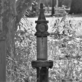Vintage Fire Hydrant by Sarah Farber - Black & White Objects & Still Life