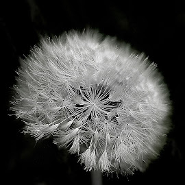 white light in the night by Bernarda Bizjak - Nature Up Close Other plants