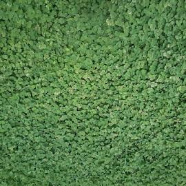 Зелено by Biliana Vitanova - Abstract Macro
