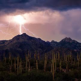 Lightning at Sabino Canyon by Gannon McGhee - Landscapes Weather ( lightning, desert, monsoon, arizona, tucson, canyon, sabino, storm, cactus, saguaro )