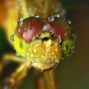 by Alit  Apriyana - Animals Insects & Spiders
