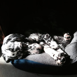 Sleeping in a sunbeam. by Dawn Mozgawa - Novices Only Pets