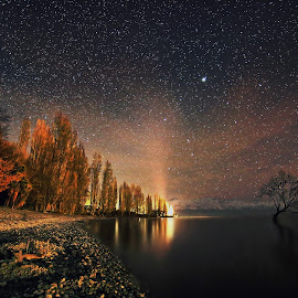 Lone Tree with Stars by Jomy Jose - Landscapes Starscapes ( wanaka, lone tree, south island, stars, lake wanaka, new zealand )