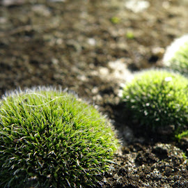 Bushes by Ivan Ristić - Nature Up Close Other plants ( macro, bushes, green, moss, rock, spring, rocks,  )