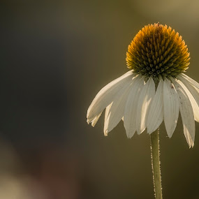 Warm summer ending by Dbart ... - Flowers Flowers in the Wild (  )