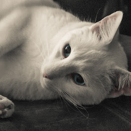 by Brooke Beauregard - Animals - Cats Portraits