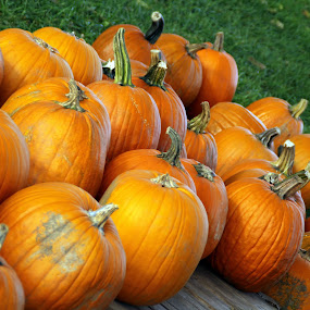 PUMPKINS! by Marsha Biller - Nature Up Close Gardens & Produce ( pwc77, pumpkins, halloween, , Food & Beverage, meal, Eat & Drink )