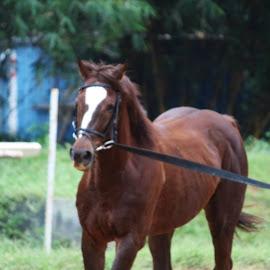 by Naveen Mahadev - Animals Horses