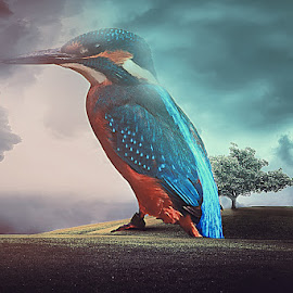 by Azhar Shaikh - Digital Art Animals ( bird, photoshop, manipulation )