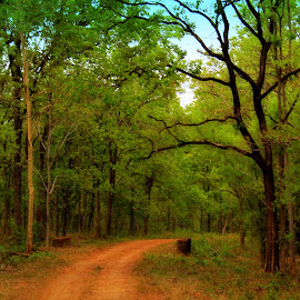 Serenity.. by Soham Chakraborty - Landscapes Forests ( forests, national park, green, trees, india, forest )