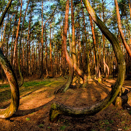 Crooked Forest by Stanley P. - Nature Up Close Trees & Bushes ( trees, forest )
