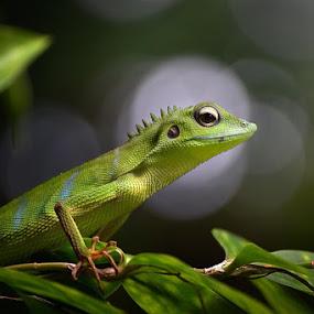 by Danang Sujati - Animals Reptiles