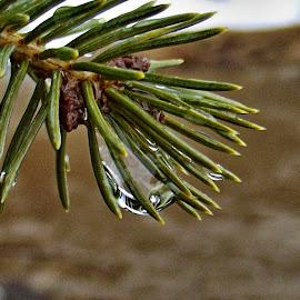 by John Geddes - Nature Up Close Natural Waterdrops