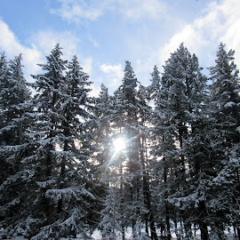 TREE TOP by Cynthia Dodd - Novices Only Landscapes ( winter, nature, outdoors, snow, trees, sun )