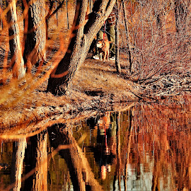 K9 Encounter by Kathy Woods Booth - Landscapes Waterscapes ( water, mirrored reflections, waterscape, trees, reflections, dog )