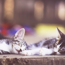 kucing turu by Hyde Tetsu - Animals - Cats Portraits ( #cat #sleep #heavenly )