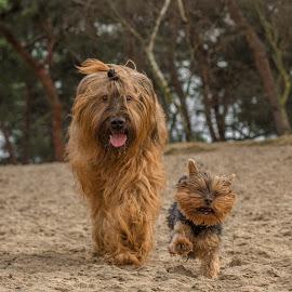 Baby girl and Fierooooo by Natasja Martijn - Animals - Dogs Running ( sand, fiero, baby girl, trees, running )