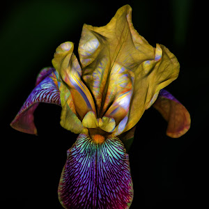 Fractal Iris.jpg