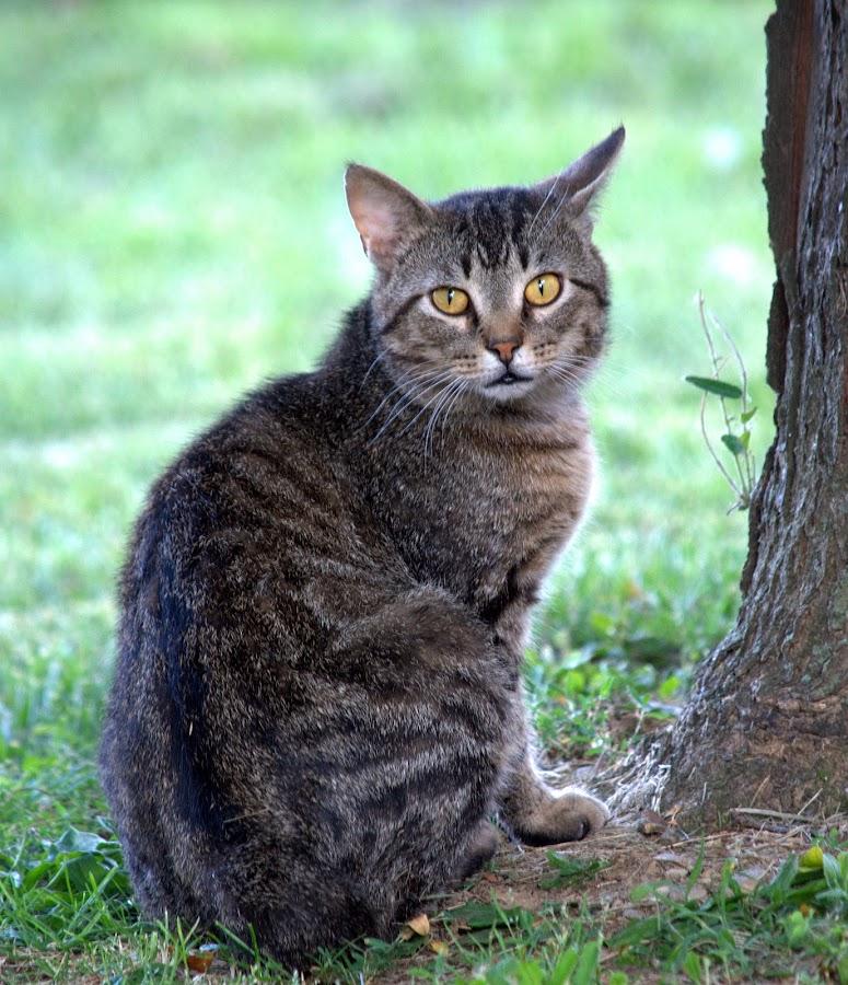 by Anita Frazer - Animals - Cats Portraits ( cat, portrait, animal,  )