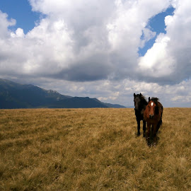 Wild horses and ominous clouds by Iulia Cristina Handrabur - Novices Only Landscapes ( amazing, new, great, europe, peaceful, horses, beautiful, 2016, nice, lovely, summer, romania, landscapes )