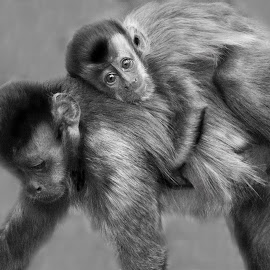 Me and my mom by Claudia Lothering - Black & White Animals