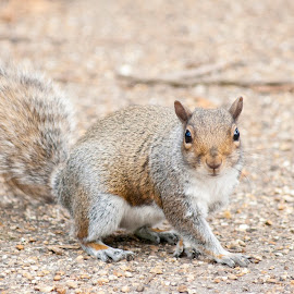 A Day In The Park by Adam Brett - Animals Other ( outdoor photography, nature, park, squirrel )