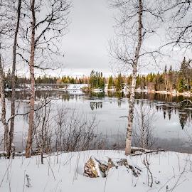 The Bridge.... by Griff Johnson - Landscapes Waterscapes ( kolasen, sweden, winter, snow, trees, bridge, jamtlands, scandanavia, river )