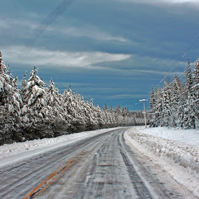 The Drive by Barb Toews - Landscapes Forests ( winter, highway, snow, forest, road, landscape )