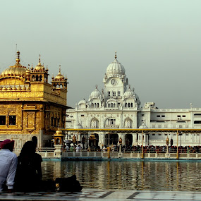 The Golden Temple by Jatin Malhotra - Buildings & Architecture Places of Worship ( golden temple, water, noon, ppl, amritsar )