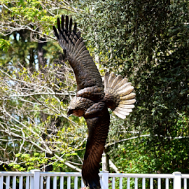 Memorial statue for eagle by Cassie Geurin - Buildings & Architecture Statues & Monuments (  )