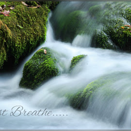 Just Breathe by Tammy Drombolis - Typography Captioned Photos ( moss, serenity, peace, floe, water, flow )