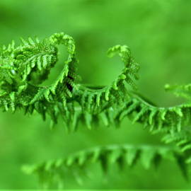 by Albina Jasinskaite - Nature Up Close Leaves & Grasses