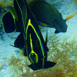 by Denise O'Hern - Animals Fish