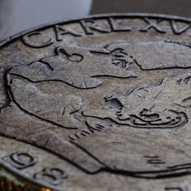 Swedish Enkrona by Tomas Nelsing - Novices Only Macro ( macro, coin, money, swedish enkrona, currency )