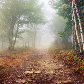 20170916-DSC_1724 by Zsolt Zsigmond - Landscapes Forests ( footpath, green color, scenics, forest, beauty in nature, leaf, morning, sunlight, landscape, light - natural phenomenon, season, nature, tree, fog, autumn, outdoors, branch, woodland, sunbeam, mist )