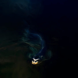 From the depths by Joshua Roberts - Digital Art Things ( ghostly, digital photography, fish, dark, water,  )