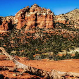 Red Rocks of Sedona by Dave Walters - Landscapes Deserts ( western landscape, az., belle rock nature red color, landscape, sedona, rocks, lumix fz2500,  )