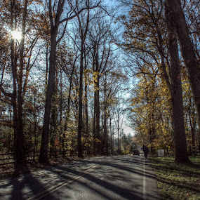 Fall Street by Giantfromsiberia Photographer - Nature Up Close Trees & Bushes ( autumn, shadow, yellow, leaves, sun )