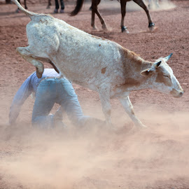 kick in the rear by Eva Ryan - Sports & Fitness Rodeo/Bull Riding ( dirty, cowboy, kingfisher ok, steer wrestling, man, oklahoma, male )