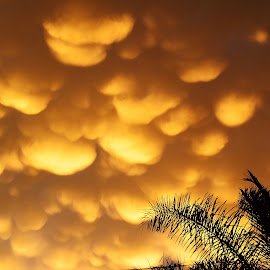 Golden clouds 1 by Hennie Wolmarans - Landscapes Weather ( clouds, sky, nature, weather, golden )