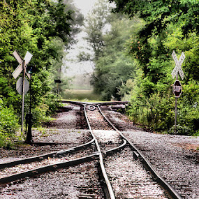 Tracks for Train by Shelly B. - Landscapes Travel