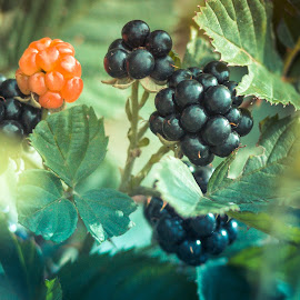 by Jimmy Kohar - Nature Up Close Gardens & Produce