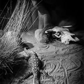 Perentie by Mel Stratton - Animals Reptiles ( lizard, monitor, perentie, goanna, monitor lizard )