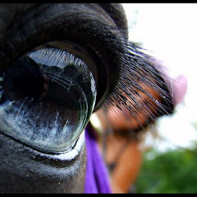 Equine Eye by Carly Stine - Animals Horses