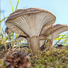 Fungi by Susan Marshall - Nature Up Close Mushrooms & Fungi (  )